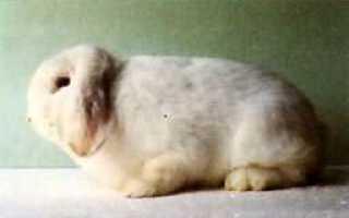 Как сделать клетку для кроликов на балконе