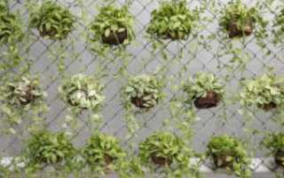 Как задекорировать сетку рабицу на заборе