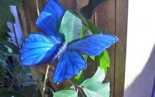 Бабочки на заборе своими руками