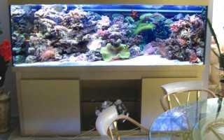 Как сделать сухой аквариум в стене своими руками