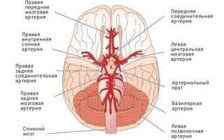 Задняя мозговая артерия какой бассейн