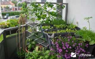 Сад огород на балконе своими руками