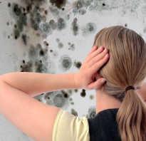 Стена с плесенью в квартире как избавиться своими руками