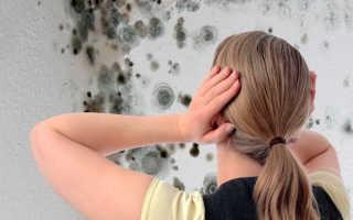 Как избавиться от плесени на стене кухни своими руками