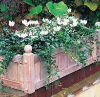 Ящики для цветов на стену своими руками